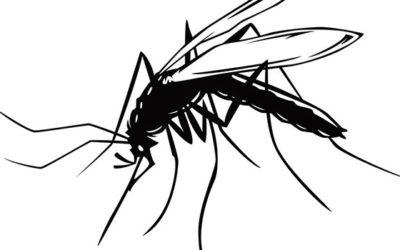 Mot utryddelse av malaria?